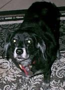 Image of Kelly, 1990-2007